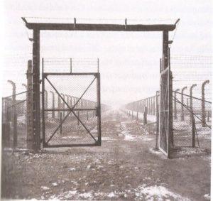 BOCCARA Dario 4 Birkenau image generique